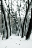 śnieżni drzewa Fotografia Royalty Free