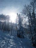 Śnieżni drzewa 2 Obraz Royalty Free