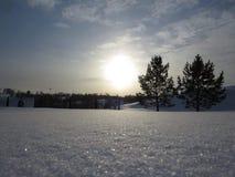 Śnieżni drzewa evening słońce zimę fotografia stock