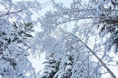 Śnieżni drzewa i Jasny niebo obrazy stock