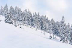 Śnieżni drzewa Ja fotografia royalty free