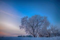 Śnieżni drzewa na polu przy zmierzchem Zdjęcia Royalty Free