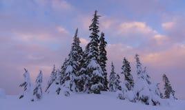 Śnieżni drzewa przy zmierzchem obrazy stock