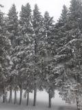 Śnieżni drzewa w podwórko Ontario obraz stock