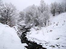 Śnieżni drzewa z zatoczką w zimie Obrazy Royalty Free