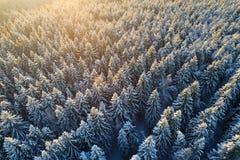 Śnieżni drzewo wierzchołki w świetle słonecznym Obraz Royalty Free