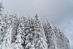 Śnieżni jedlinowi drzewa i chmurny niebo w górach Fotografia Royalty Free