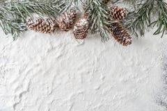 Śnieżni jodły sosny i gałąź rożki na zimy tle Obrazy Stock