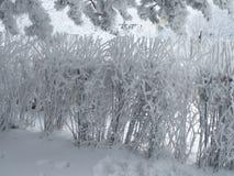 Śnieżni krzaki Obraz Stock
