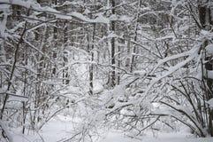 Śnieżni krzaki w lesie Obrazy Stock