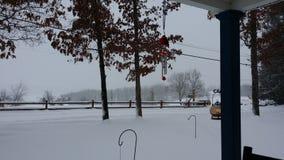 Śnieżni kuranty Zdjęcia Royalty Free