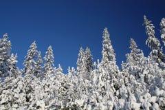 śnieżni niebieskich nieb drzewa Obrazy Stock
