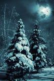 śnieżni objętych evergreens Zdjęcia Stock