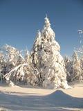 śnieżni qc zakrywający drzewa Zdjęcia Royalty Free