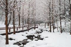 śnieżni rzek drewna Obraz Royalty Free