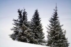 śnieżni sosen drzewa Obrazy Royalty Free