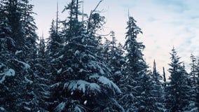 Śnieżni Spada drzewa Powietrzni zbiory