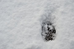 śnieżni zwierzę ślada Zdjęcie Royalty Free