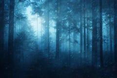 Śnieżny świerkowy lasowy tło Obraz Stock