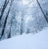 śnieżny Zdjęcia Royalty Free