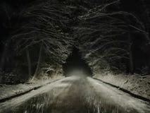 Śnieżny burza las zdjęcie royalty free