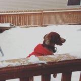 Śnieżny czas Zdjęcie Stock