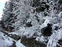 Śnieżny drzewo 3 fotografia stock
