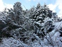 Śnieżny drzewo 6 obrazy stock