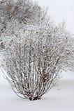 śnieżny drzewo Fotografia Stock