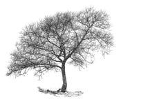 śnieżny drzewo Zdjęcia Royalty Free