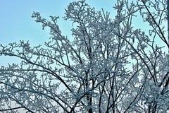 śnieżny drzewo Obraz Royalty Free