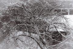 Śnieżny drzewo w mieście Obrazy Royalty Free