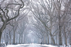 Śnieżny dzień w NYC Zdjęcie Royalty Free