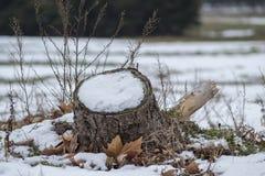 Śnieżny fiszorek 2 Obraz Royalty Free
