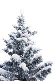 śnieżny futerka drzewo Zdjęcia Stock