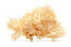 Śnieżny grzyb obraz stock