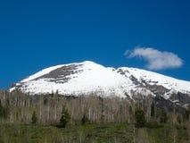 Śnieżny Halny las Zdjęcie Stock