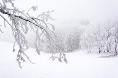 Śnieżny i zamarznięty konar zdjęcia royalty free