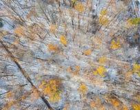 Śnieżny i zamarznięty zima las Fotografia Stock