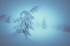 Śnieżny jedlinowy drzewo Obrazy Royalty Free