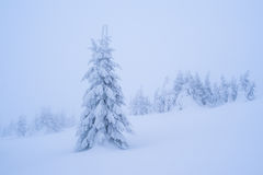 Śnieżny jedlinowy drzewo Zdjęcie Royalty Free