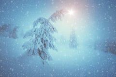 Śnieżny jedlinowy drzewo Obrazy Stock