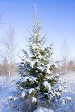 śnieżny jodły drzewo Fotografia Royalty Free