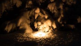 Śnieżny kaktus w zimie obrazy stock