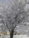 Śnieżny Klamath okręg administracyjny Obraz Royalty Free