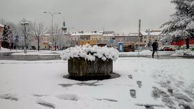 Śnieżny krzak Obraz Royalty Free