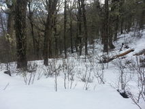 Śnieżny las obrazy royalty free