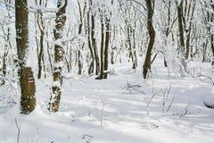 Śnieżny las Obraz Royalty Free