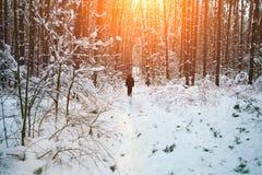 Śnieżny las Zdjęcia Royalty Free