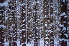 Śnieżny las Obrazy Stock